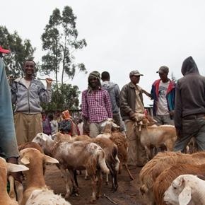 Livestock Markets