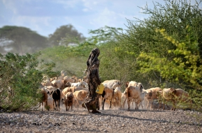 Healthy animals, healthy returns: Improving pastoralists' livelihoods in Kenya