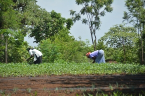 Fitting climate smart agriculture interventions to size: New study reveals successfactors
