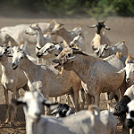 Learning Initiative on reducing land conflicts between farmers and livestockkeepers