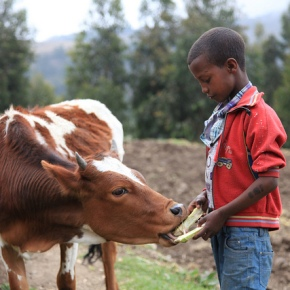 A new project is launched to support climate-smart livestock strategies and investments in EastAfrica