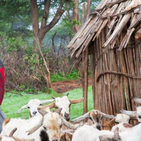Healthy rangelands, healthy livestock and healthy people: A fully integrated One Health approach in pastoralEthiopia